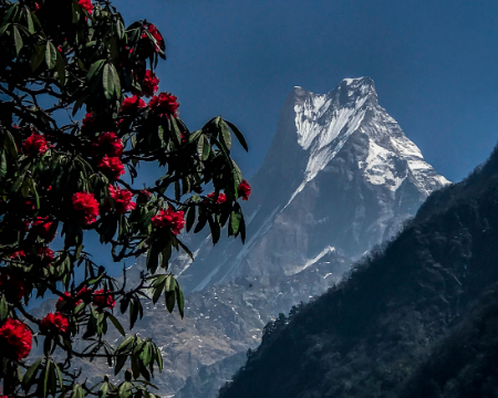 Seven Reasons Why You Should Go For The Annapurna Base Camp Trek