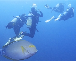 Advanced Open Water - Scuba Diving Course