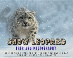 Snow Leopard and Mountain Photography Masterclass With Padma Shri Anup Sah